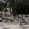 Apple Grove (Manzanar)